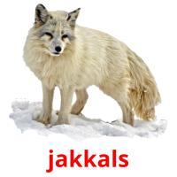 jakkals picture flashcards