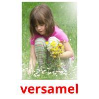 versamel picture flashcards