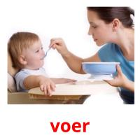 voer picture flashcards