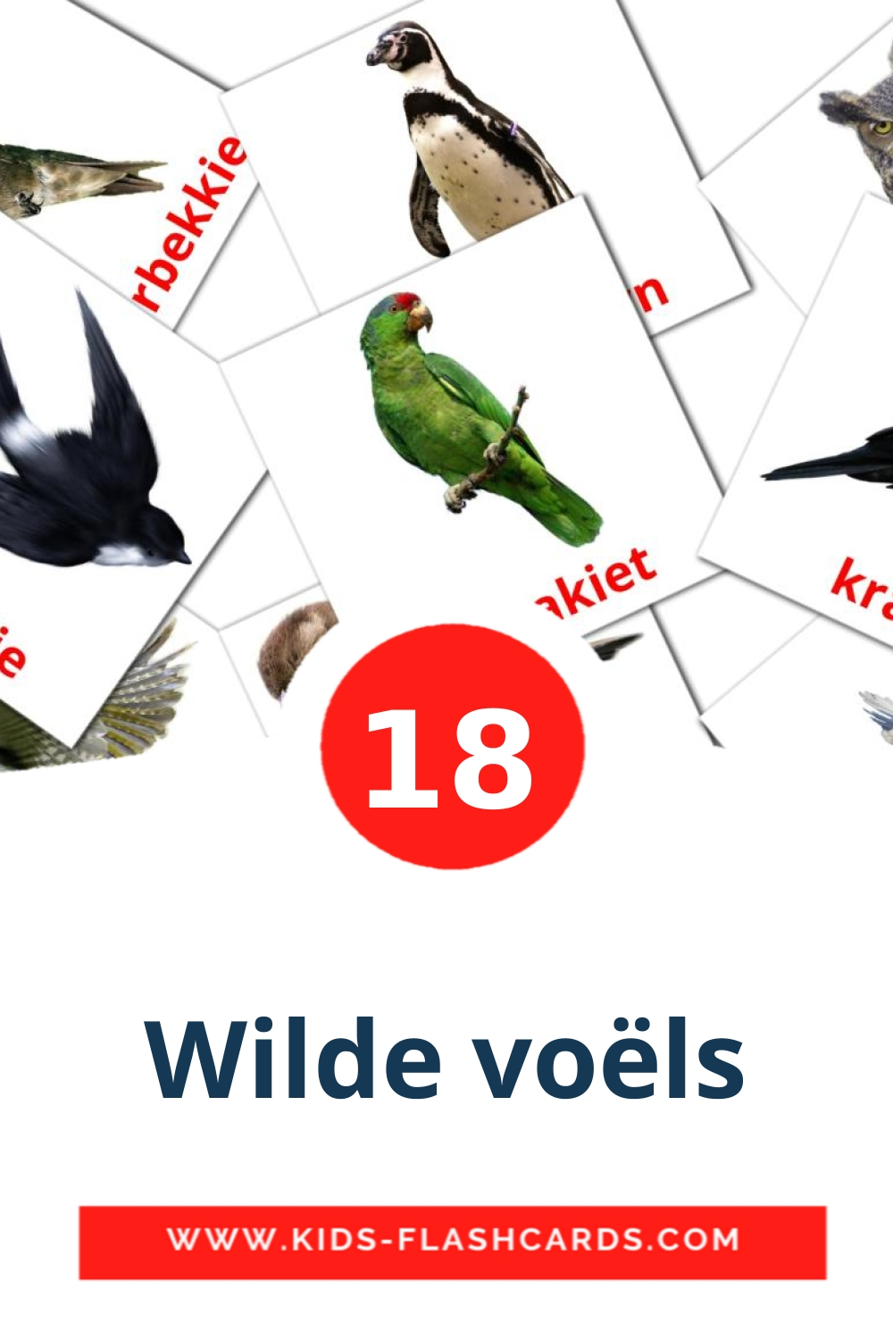 18 Wilde voëls Picture Cards for Kindergarden in afrikaans