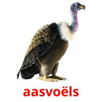 aasvoëls picture flashcards