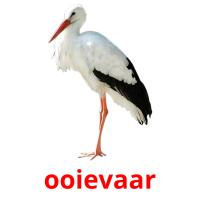 ooievaar picture flashcards