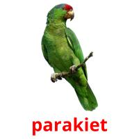 parakiet picture flashcards