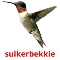 suikerbekkie picture flashcards