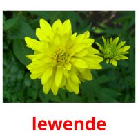 lewende picture flashcards