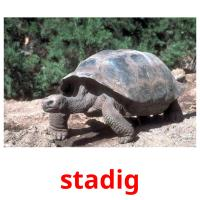 stadig picture flashcards