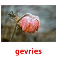 gevries picture flashcards