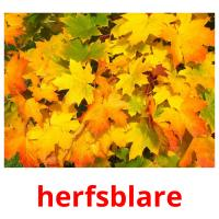 herfsblare picture flashcards