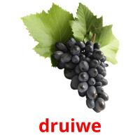 druiwe picture flashcards
