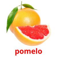 pomelo picture flashcards