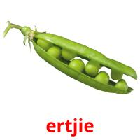 ertjie picture flashcards