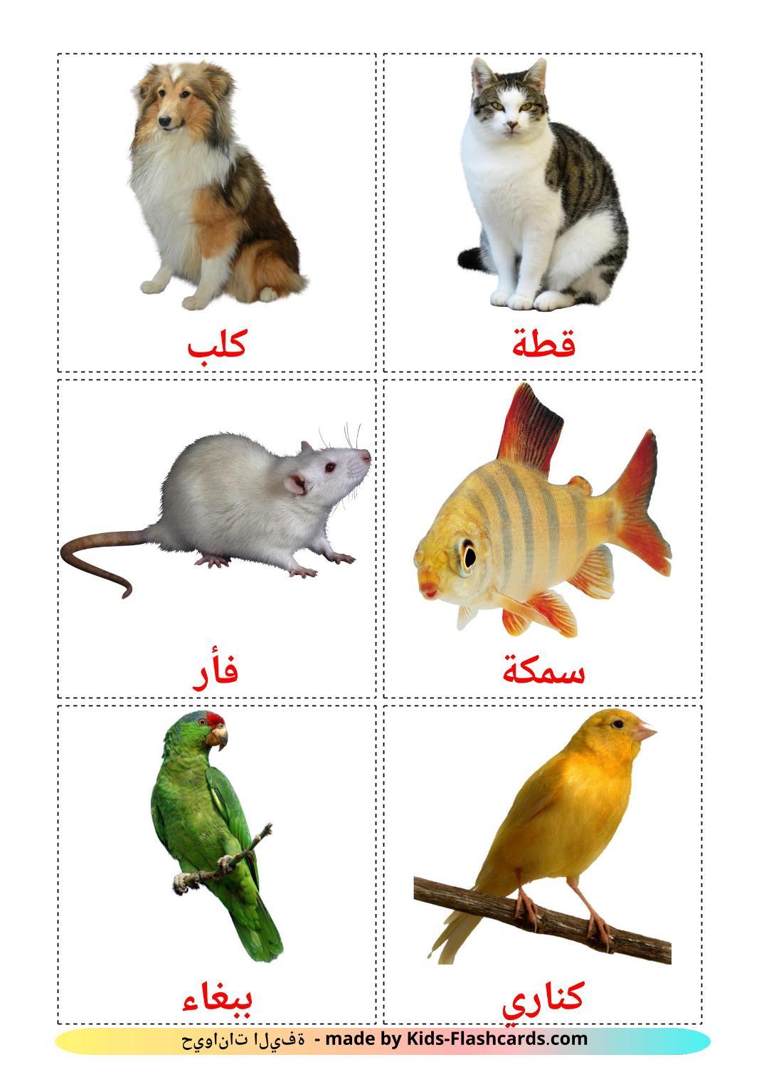 Domestic animals - 10 Free Printable arabic Flashcards