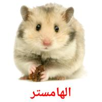 الهامستر picture flashcards