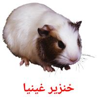 خنزير غينيا picture flashcards