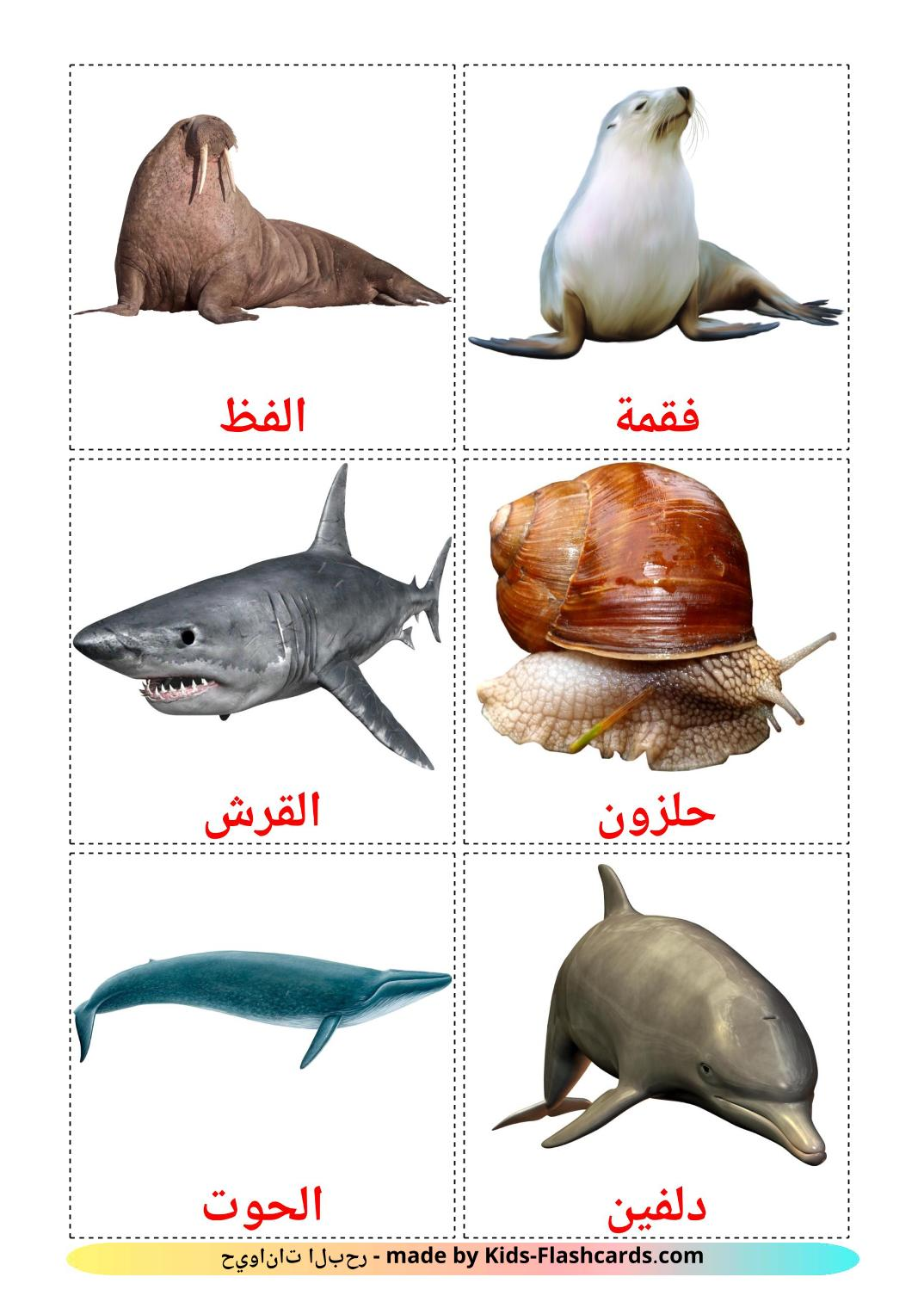 Sea animals picture cards for Kindergarden in arabic