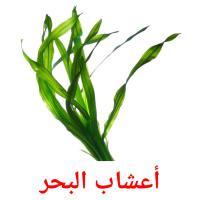 أعشاب البحر picture flashcards