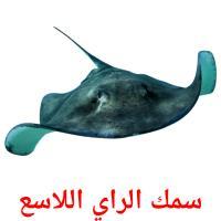 سمك الراي اللاسع picture flashcards