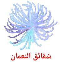 شقائق النعمان picture flashcards
