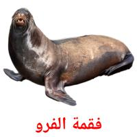 فقمة الفرو picture flashcards