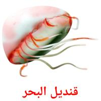 قنديل البحر picture flashcards