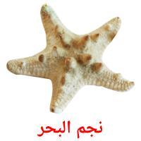 نجم البحر picture flashcards