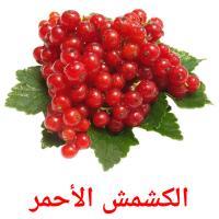 الكشمش الأحمر picture flashcards