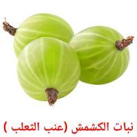 نبات الكشمش (عنب الثعلب ) picture flashcards