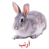 أرنب picture flashcards