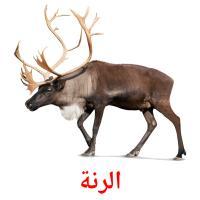 الرنة picture flashcards