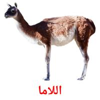 اللاما picture flashcards