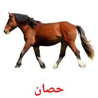 حصان picture flashcards