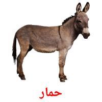 حمار picture flashcards