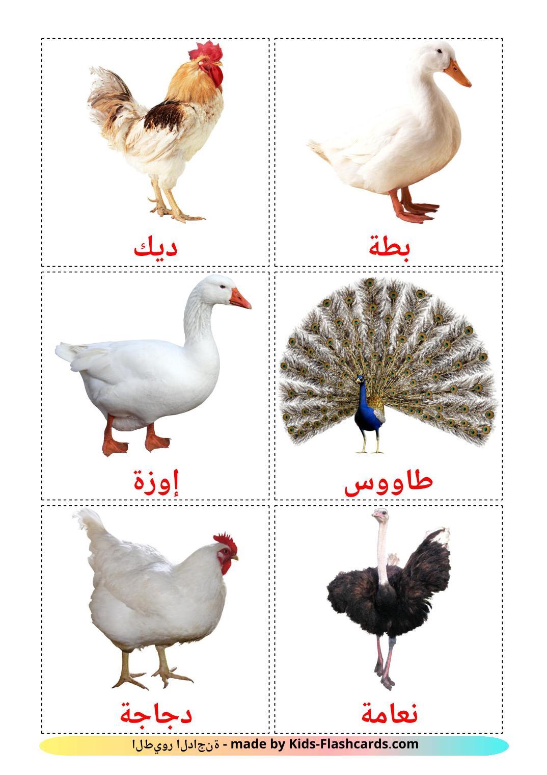 Farm birds - 11 Free Printable arabic Flashcards