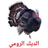 الديك الرومي picture flashcards