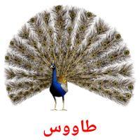 طاووس picture flashcards