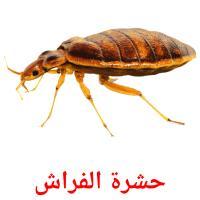 حشرة الفراش picture flashcards