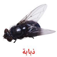 ذبابة picture flashcards