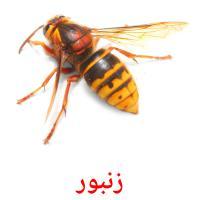 زنبور picture flashcards