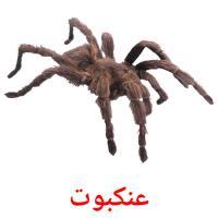 عنكبوت picture flashcards