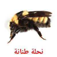 نحلة طنانة picture flashcards
