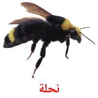 نحلة picture flashcards