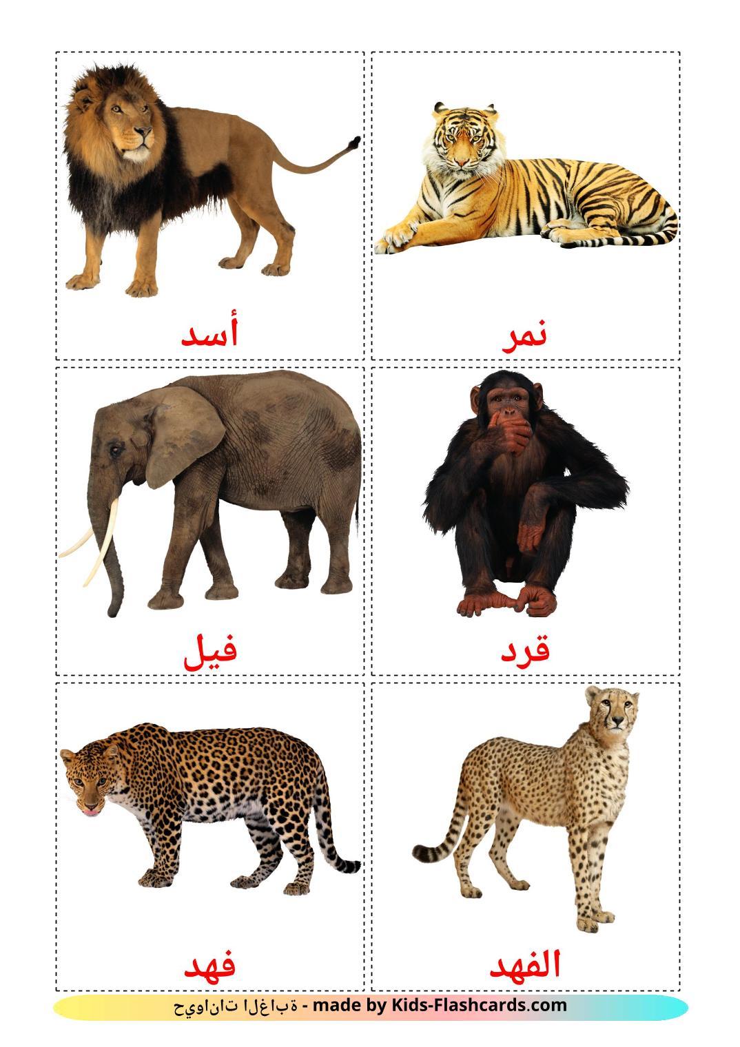 Jungle animals - 21 Free Printable arabic Flashcards