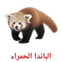 الباندا الحمراء picture flashcards