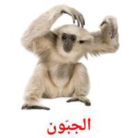 الجبّون picture flashcards