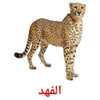 الفهد picture flashcards
