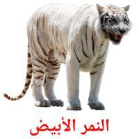 النمر الأبيض picture flashcards