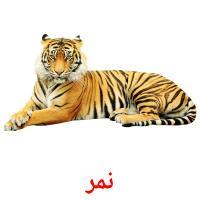 نمر picture flashcards