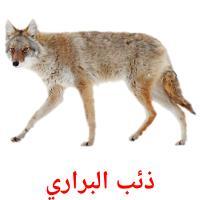 ذئب البراري picture flashcards