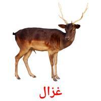 غزال picture flashcards
