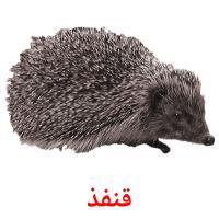 قنفذ picture flashcards